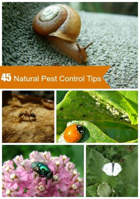 organic garden pest 17 best images about pest for all types of pests