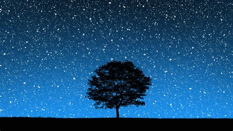 cool tree stars sky on field and lonely tree stock footage 3500021