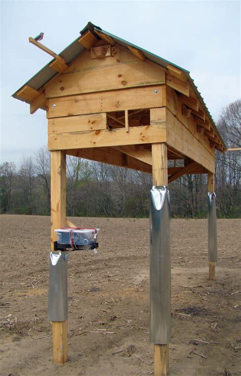 Diy Barns Barn Swallows And Social Cues Beco