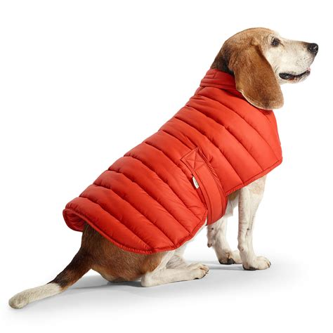 low temperature in dogs do dogs really need coats in winter months pets world