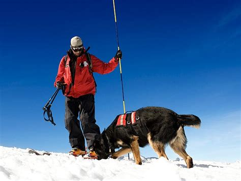 search and rescue dogs disaster search and rescue dogs working dogs and german shepherds