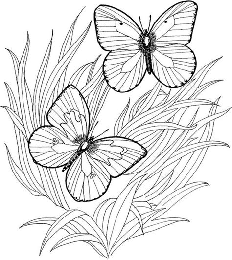 coloring pages for adults butterflies butterfly coloring page
