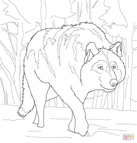 coloring page gray wolf crouching gray wolf coloring page free printable