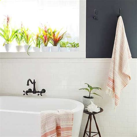 plants to keep in bathroom 1000 images about we love tropical flowers on pinterest sun flower and plants