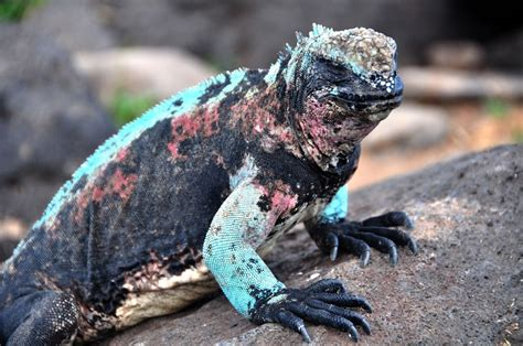 galapagos islands animals galapagos islands animal list facts and pictures
