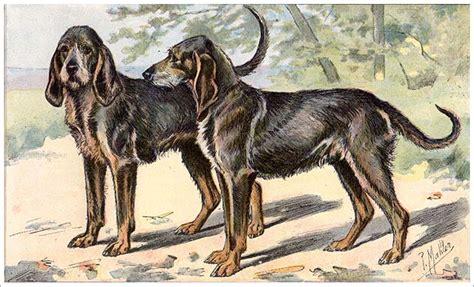extinct dogs extinct breeds gublog gudog uk
