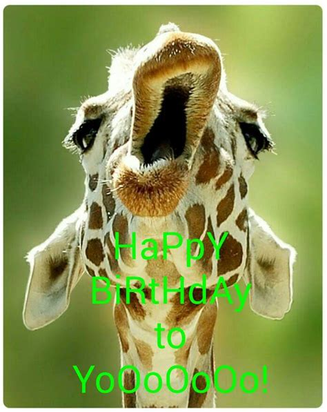 Giraffe Birthday Meme - happy birthday to yooooooo giraffe meme happy