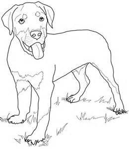 Rottweiler Puppies Coloring Pages | rottweiler puppy coloring page free printable coloring pages