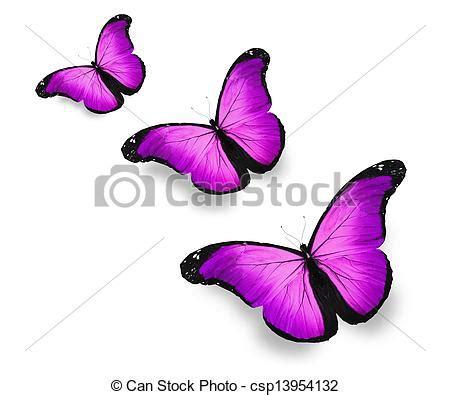 imagenes mariposas violetas dibujos de blanco mariposas violeta aislado tres