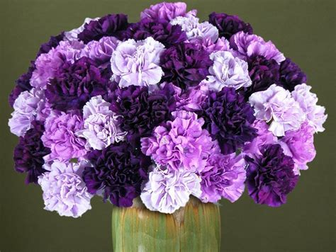 carnation flower history and meaning of carnations proflowers