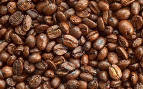 Development: Coffee bean, picture nr. 57331