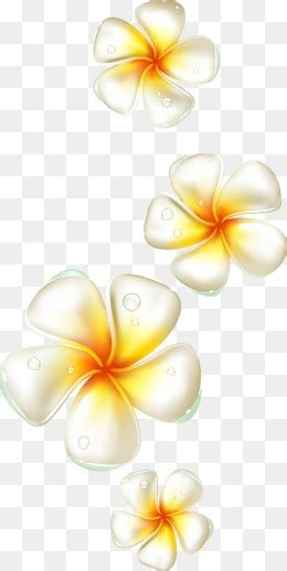 plumeria vector plumeria png images vectors and psd files free