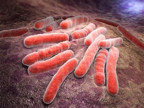 tubercolosi test is tuberculosis an autoimmune disease news today