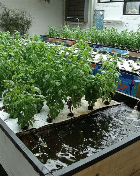 backyard hydroponics aquaponics system aquaponics pinterest