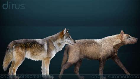 lobo gigante bestias prehistoricas parte 3 no dinosaurios taringa
