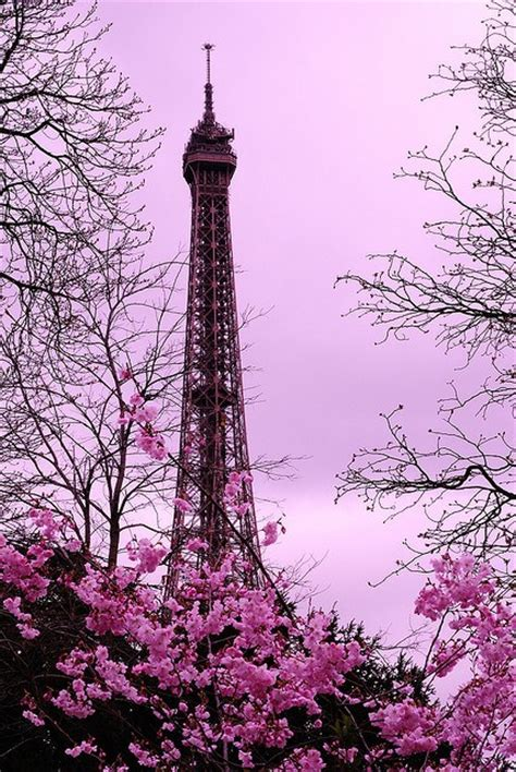 paris in bloom 30 extraordinary pictures that will blow your mind youramazingplaces com