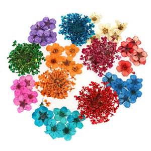 One Set Flower real dried flowers nail accessories 12 style sets