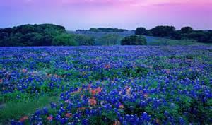 Florist Tx Bluebonnets Five State Flowers