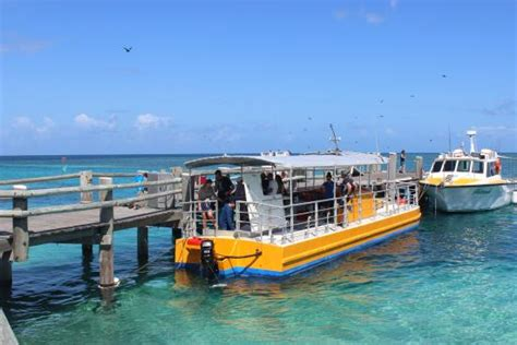 glass bottom boat picture of heron island resort heron - Glass Bottom Boat Tours Gladstone