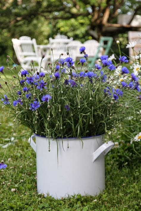 wildflower container garden best blue flowers to grow in containers balcony garden web