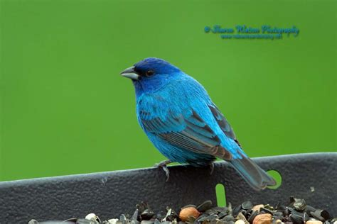 Backyard Birding by Nd Backyard Birding Nd Backyard Birding