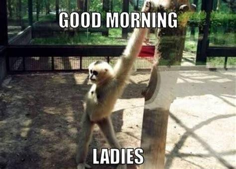 Funny Monday Morning Memes - 1000 good morning memes funny kermit memes monday gm