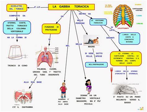 gabbia toracica mappa concettuale gabbia toracica scuolissima