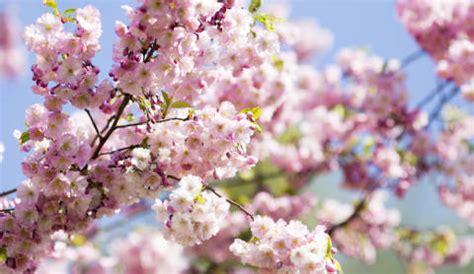 spring start 5 ways of raising environmentally conscious children