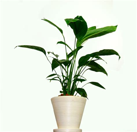 Houseplants That Don T Need Light by 5 Tips For Your Houseplant In The Winter Anthony Petitti