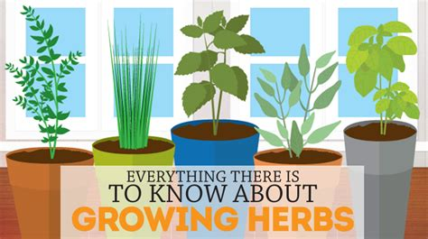 how to grow a herb garden how to grow an herb garden bite sized biggie