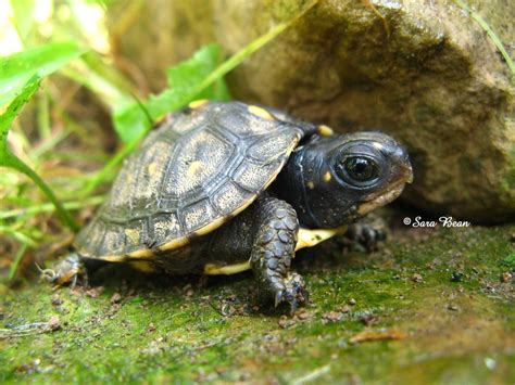 Baby turtles wallpapers   Baby Animals