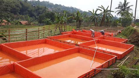 Pembenihan Lele Di Kolam Terpal cara budidaya ikan lele di kolam terpal lengkap untuk pemula