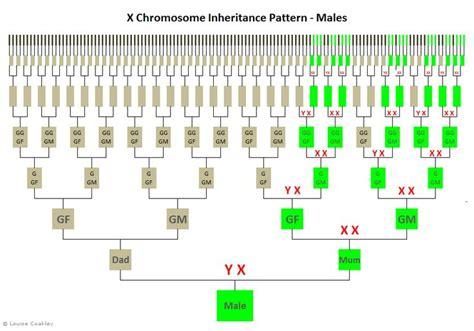 dna pattern name 1000 images about genealogy dna genetics on pinterest