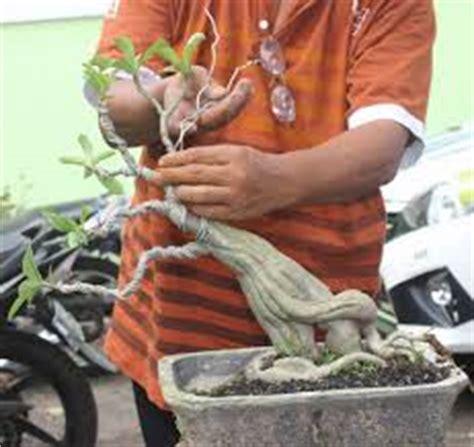 Membuat Bonsai Adenium membuat bunga adenium unik bentuk hewan tanaman bunga hias