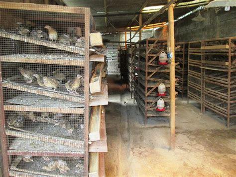Obat Fermentasi Pakan Ternak Sapi cara ternak kambing pakan ternak kambing alternatif