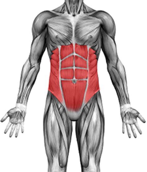 core strengthening freeflo physiotherapy