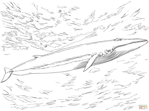 Fin Or Finback Whale Coloring Online Super Coloring Blue Whale Coloring Page