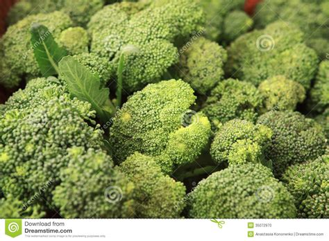 kale broccoli and cabbage replace traditional flowers as cabbage broccoli brassica silvestris stock photo