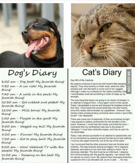 vs cat diary 9gag cat and diary so true quotes cats and dogs