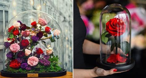 beauty and the beast forever rose beautiful beauty and the beast style forever roses