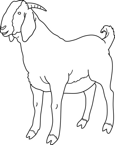 Free Coloring Pages Of Goat Coloring Page Goat