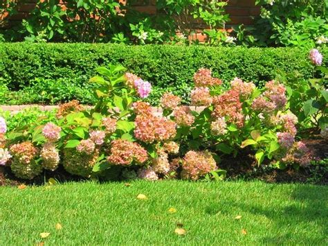 Custom Garden Designs Great Resources Hydrangea Shrubs Garden Shrubs Ideas