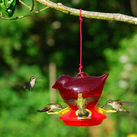 songbird essentials bird company red bird hummingbird bird