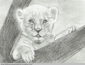 dibujar animales salvajes a lapiz imagui leones para dibujar a l 225 piz imagui art pinterest