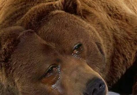 crying bear blank template imgflip
