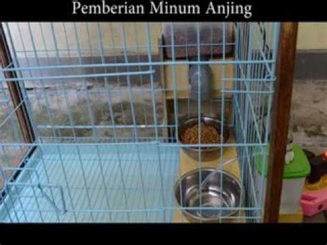Botol Minum Hewan Kucing Anjing Water Feeder 500cc diy automatic cat feeder funnycat tv