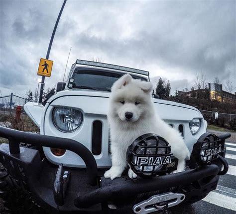 glitter jeep wrangler 17 best images about oiiiiio on pinterest best jeep