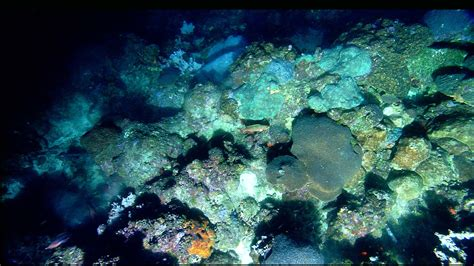 Flower Garden Reef Flower Garden Banks National Marine Sanctuary Secrets Of