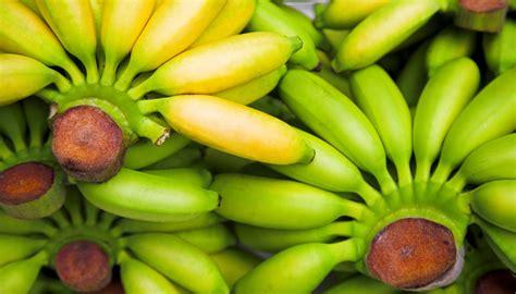 alimenti ricchi di serotonina biogenic amines