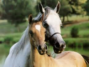Wallpaper gallery beautiful horse wallpaper 2